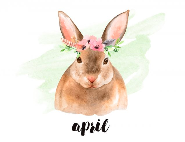 april rabbit