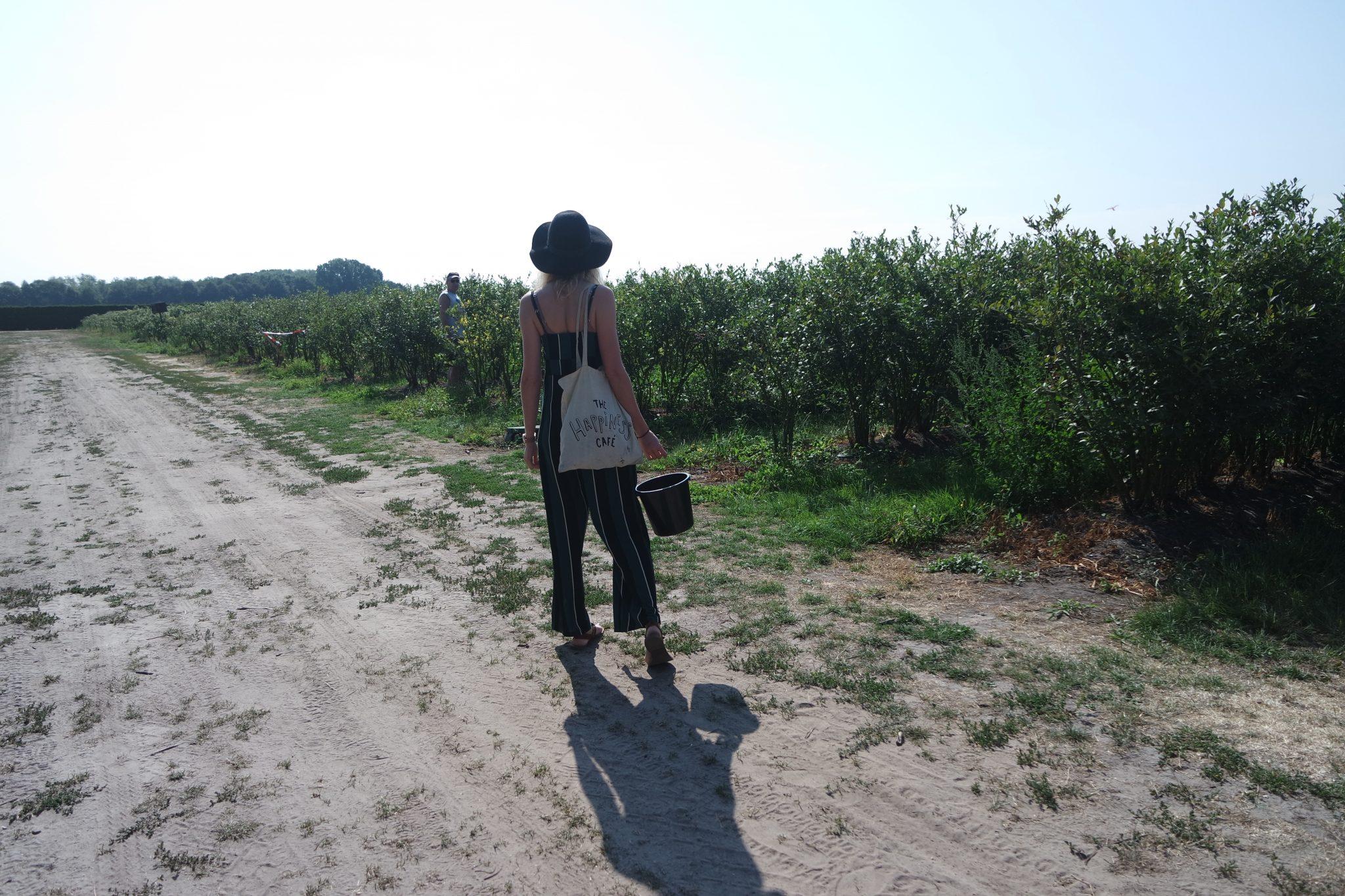 blauwe bessen zelfpluk boerderij