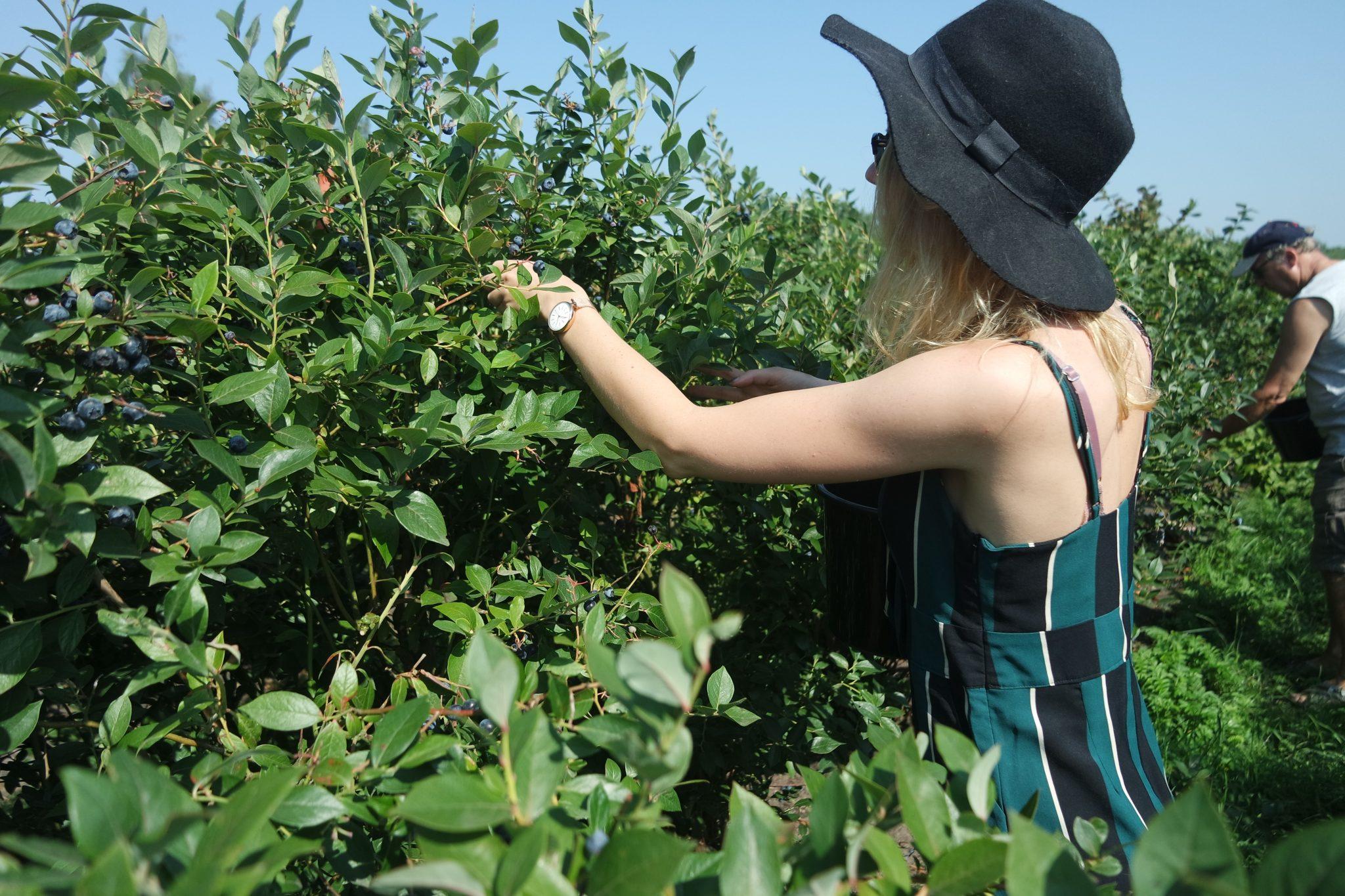 bessen plukken zelf pluk boerderij